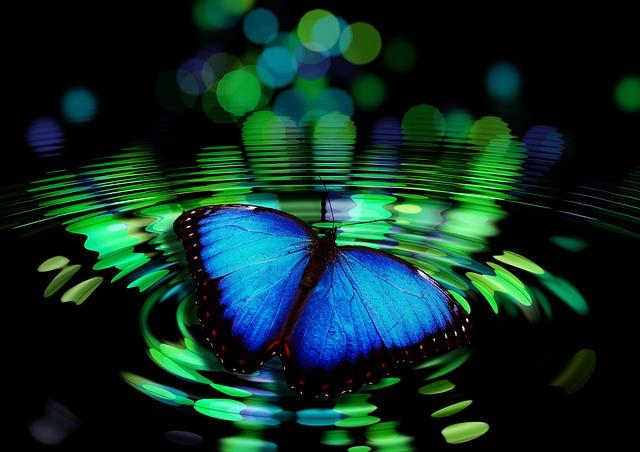 butterfly-492536_640