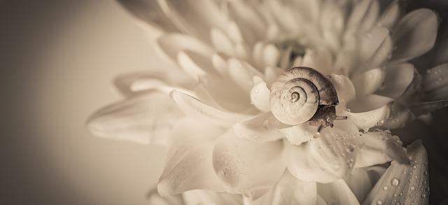 snail-3706996_640