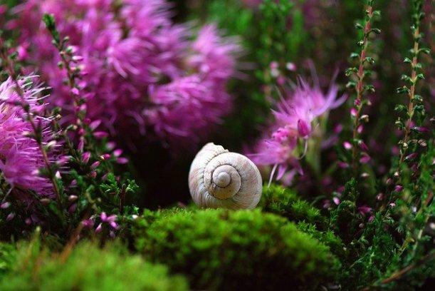 snail-582201_640